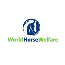 World Horse Welfare 250